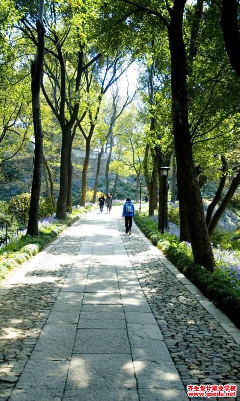 园路一般分为哪几种,各自如何进行植物配置?
