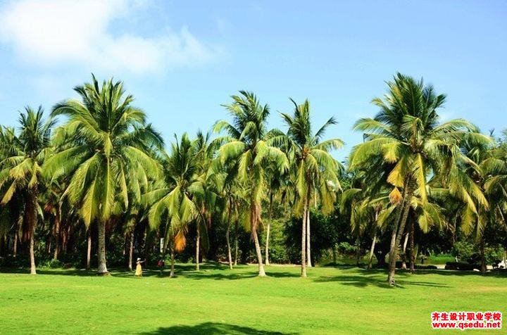 椰子的形态特征、生长习性和园林用途