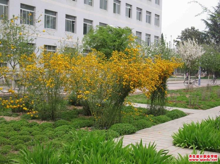 棣棠的花期、形态特征、生长习性和园林用途