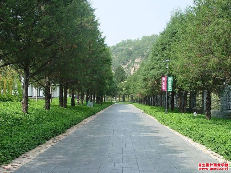 白花三叶草的花期、形态特征、生长习性和园林用途