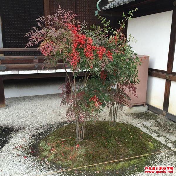 南天竹的形态特征、生长习性和园林用途