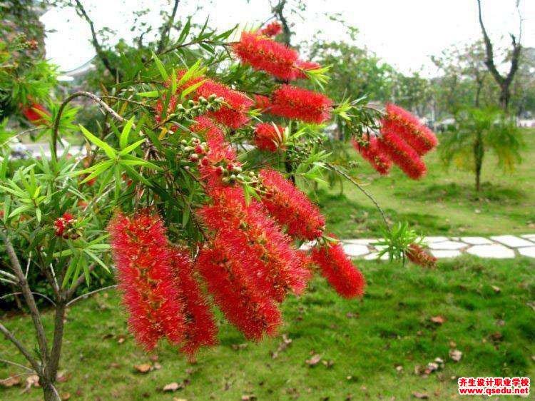 串钱柳的花期、形态特征、生长习性和园林用途