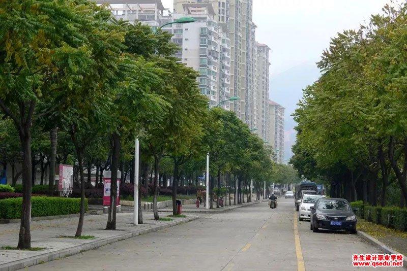 麻楝树的形态特征、生长习性和园林用途