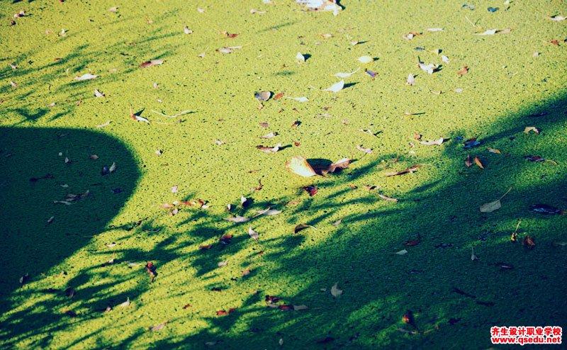 浮萍的形态特征、生长习性和园林用途