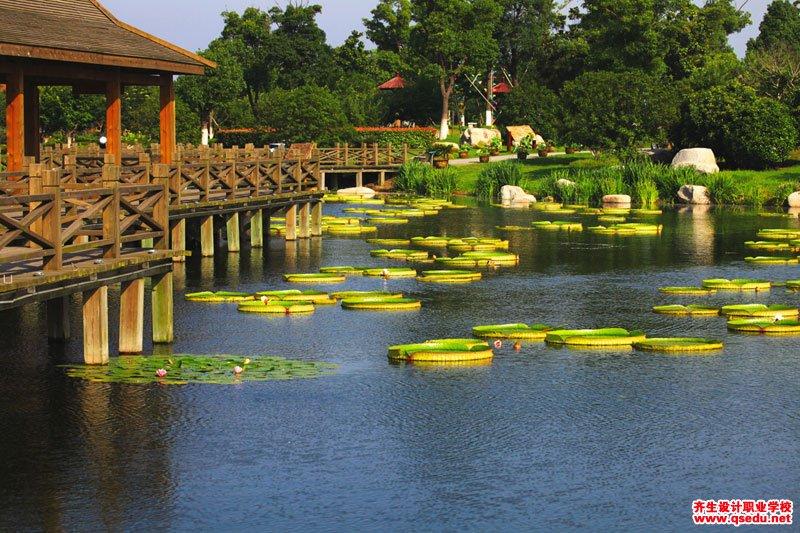 亚马逊王莲的花期、形态特征、生长习性和园林用途